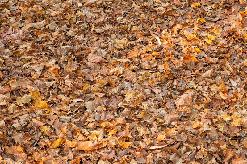 Autumn fallen dry Leaves. Lying on ground royalty free stock photography
