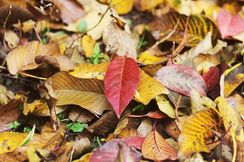 Autumn. Fallen leaves. Colored nature stock image