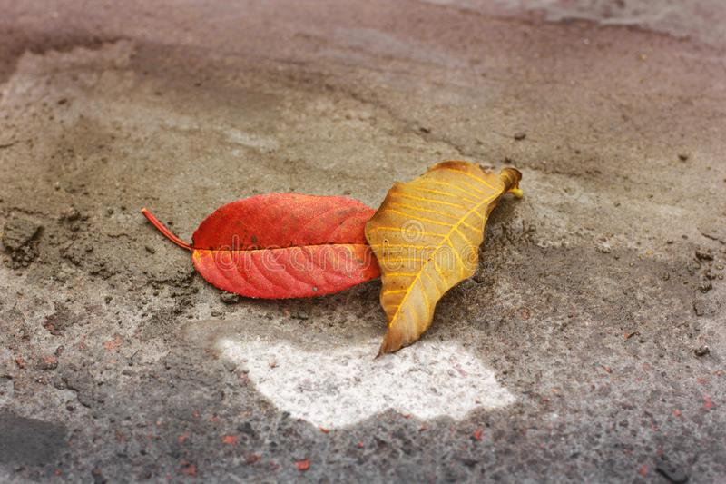 Autumn. Fallen leaves. Colored nature stock photo