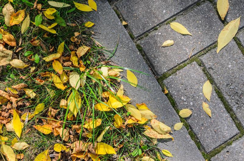 Autumn Fallen Leaves auf der Pflasterung und dem Rasen lizenzfreie stockfotografie