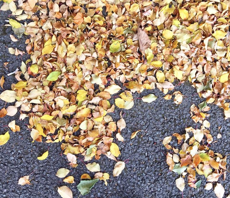 Autumn fallen leaves. On ground orange yellow green stock images