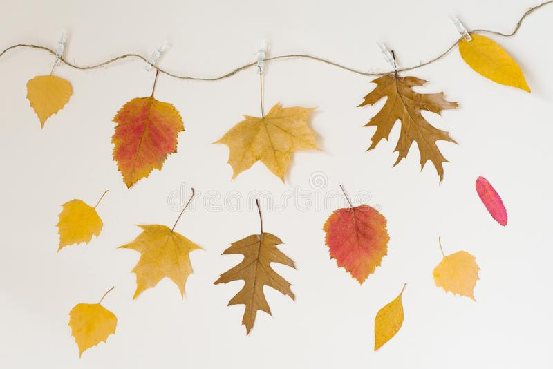Autumn fallen leaves hang on a rope with clothespins on a light beige background and falling leaves. The concept of autumn discoun. Ts. Price fall stock images