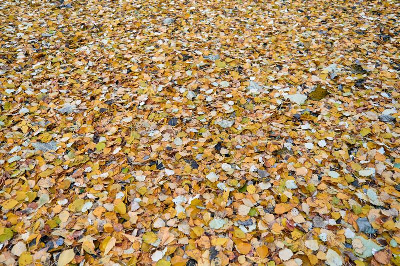 Autumn fallen leaves lie on the ground with a continuous colorful carpet. stock images