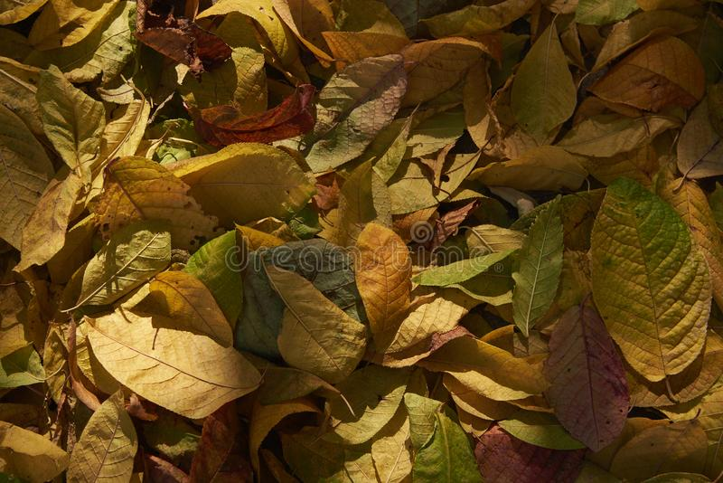 Autumn fallen leaves in natural sunlight. Background stock photos