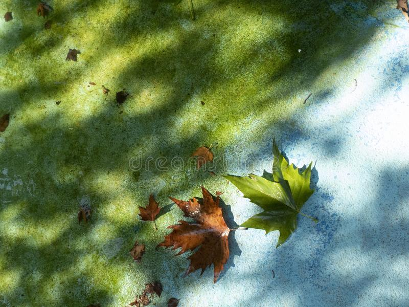 Autumn fallen leaves on the shore of an artificial pond in the light of the evening sun, autumn is coming soon stock photography