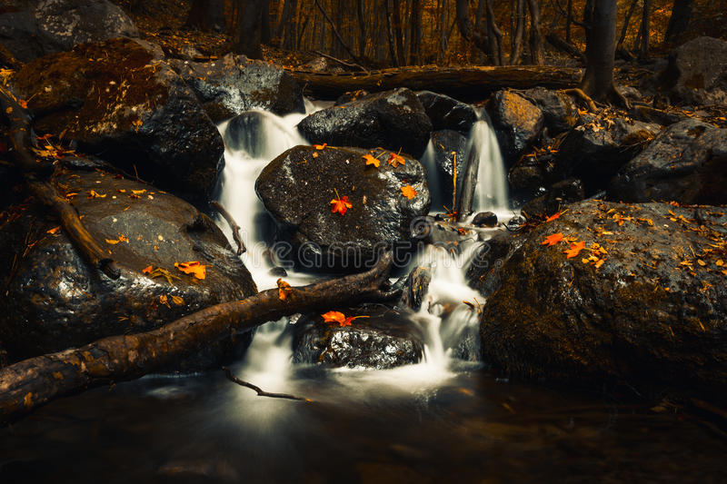 Autumn fallen yellow and red leaves in waterfall on Vitosha Mountain royalty free stock image