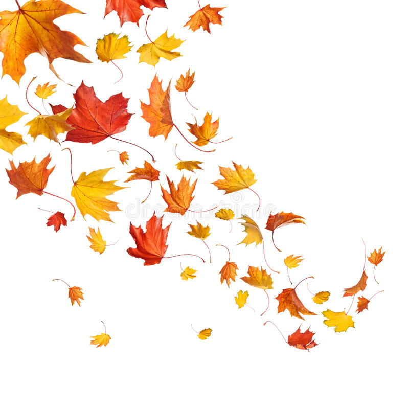 Autumn falling leaves. Isolated on white background royalty free stock photography