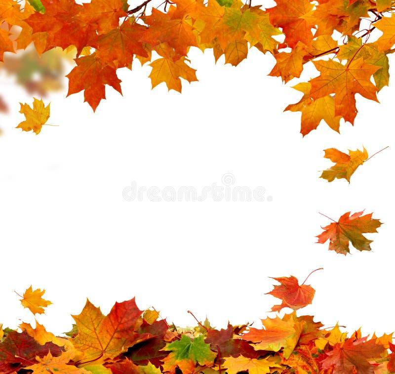 Free Autumn Falling Leaves Stock Image - 45451731