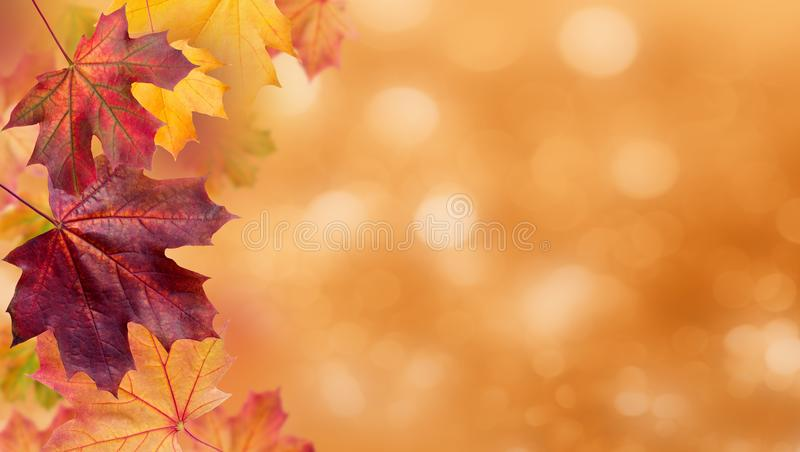 Autumn falling leaves. Autumnal foliage fall and poplar leaf flying in wind motion blur. Autumn design. stock photography