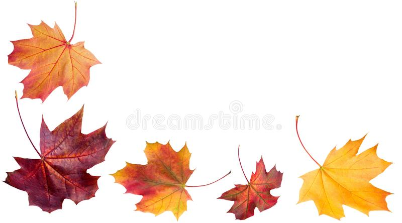 Autumn falling leaves. Autumn design. Templates for placards, ba. Autumn falling leaves. Autumn design. Autumn leaves royalty free stock images