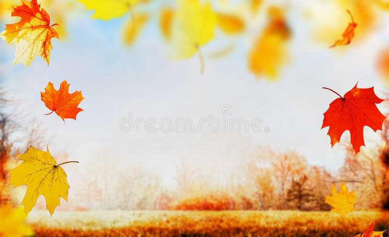 Autumn falling leaves on nature garden or park background with lawn, sky and colorful trees foliage, outdoor stock image