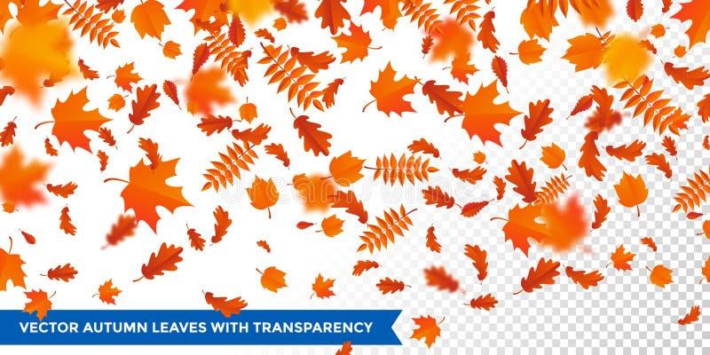 Autumn falling leaves pattern transparent background maple, oak, birch, cestnut leaf fall. Autumn falling leaves pattern on transparent background. Vector vector illustration