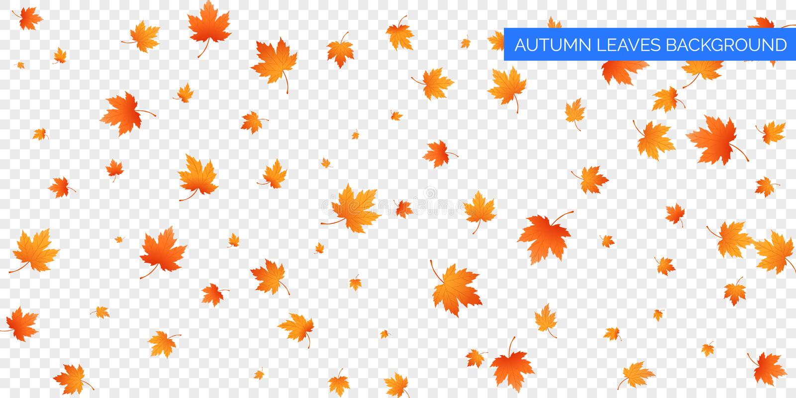 Autumn falling leaves on transparent background. Vector autumnal foliage fall of maple leaves. Autumn background design.  royalty free illustration