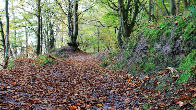 Fall leaves cover walkway in the forest. Autumn falling leaves truly nature color cover pathway in the forest.Germany stock photo