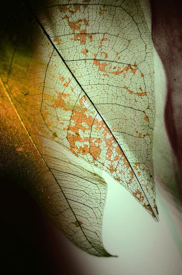 Autumn Fantasy photos libres de droits