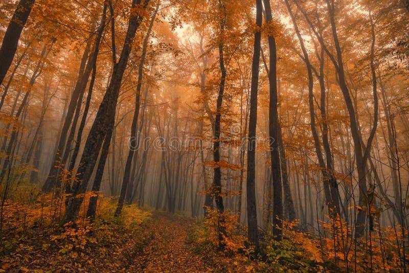 Autumn fantasy. Fantasy landscape of the foggy autumn forest royalty free stock photo