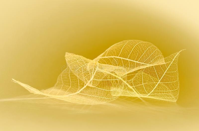 Autumn fantasy leaves. Skeletonized eucalyptus leaves close-up. Yellow fantasy stock illustration