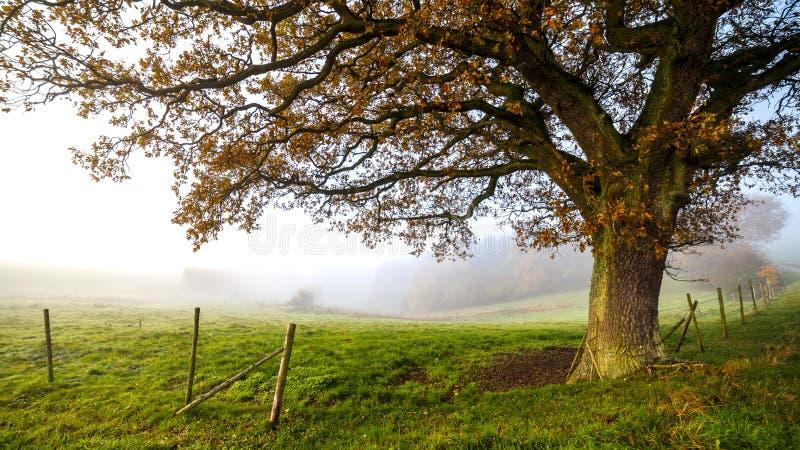 Autumn Farm stock fotografie