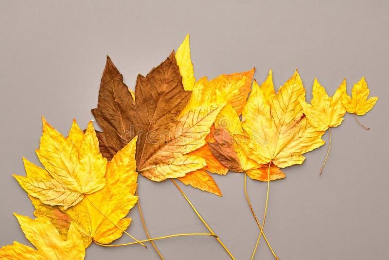 Autumn Fashion De achtergrond van dalingsbladeren wijnoogst stock foto
