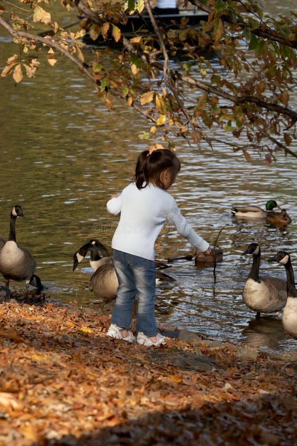 Free Autumn Feeding Royalty Free Stock Photo - 600675