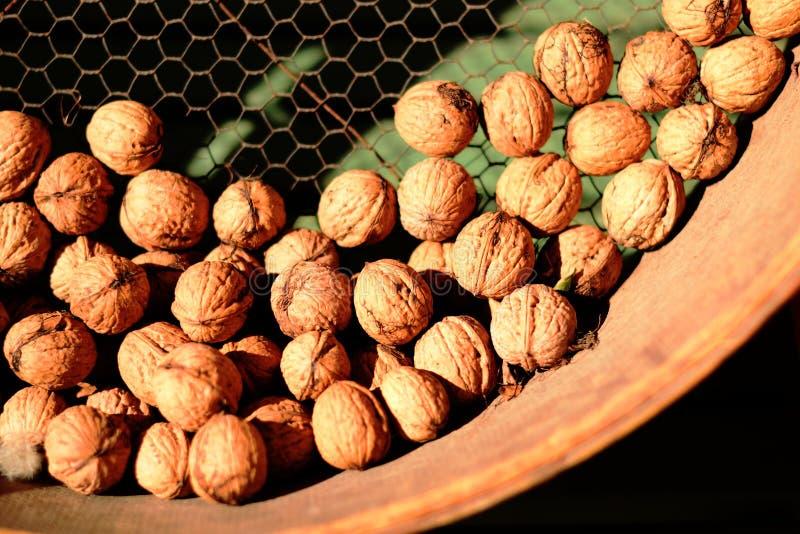 Autumn feeling walnuts royalty free stock photos
