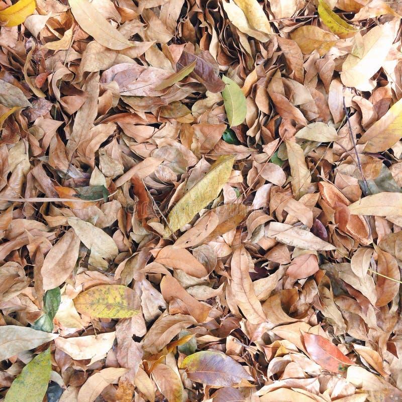 Autumn Feels imagenes de archivo