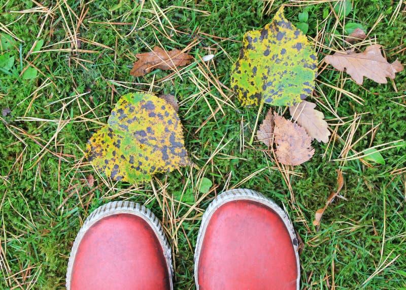 Autumn feet stock photo