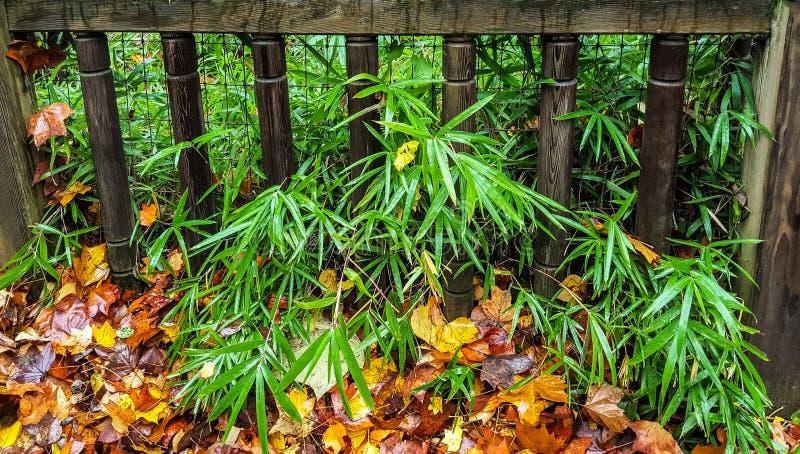 Autumn Fence images libres de droits