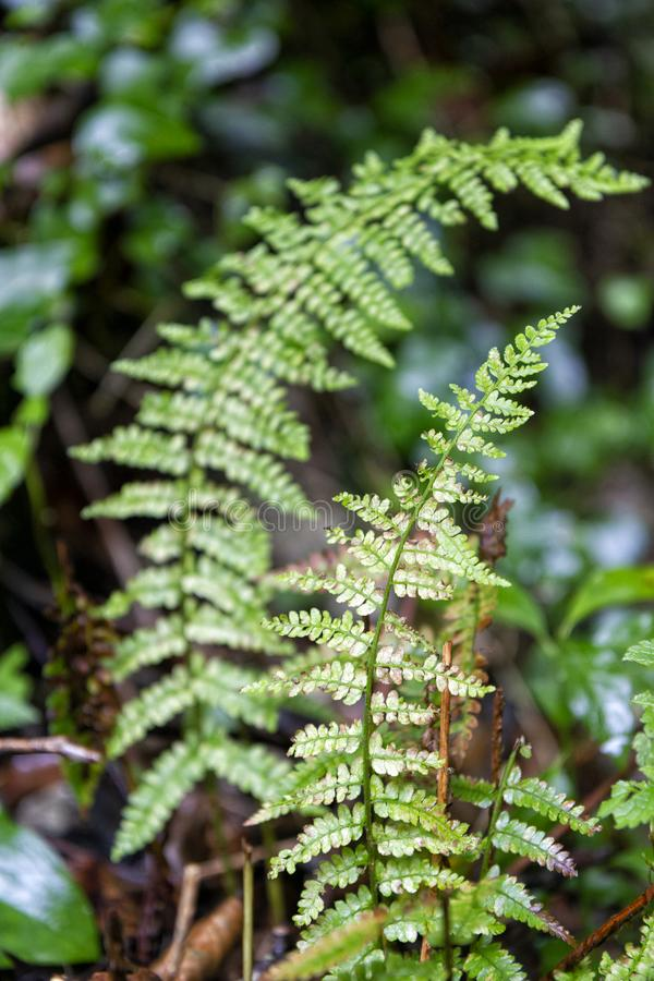 Autumn fern. Detail of colorful autumn fern stock images