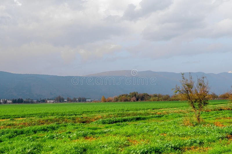 Autumn Field stock images