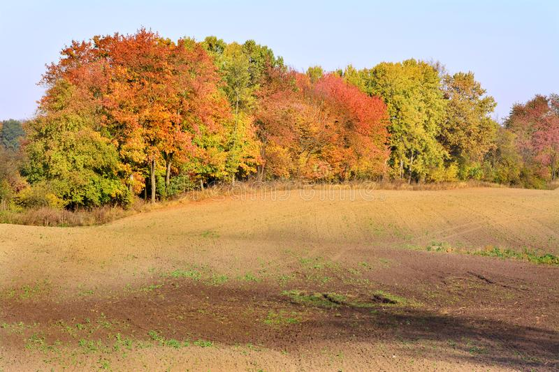 Autumn field and trees, beautiful landscape royalty free stock photos