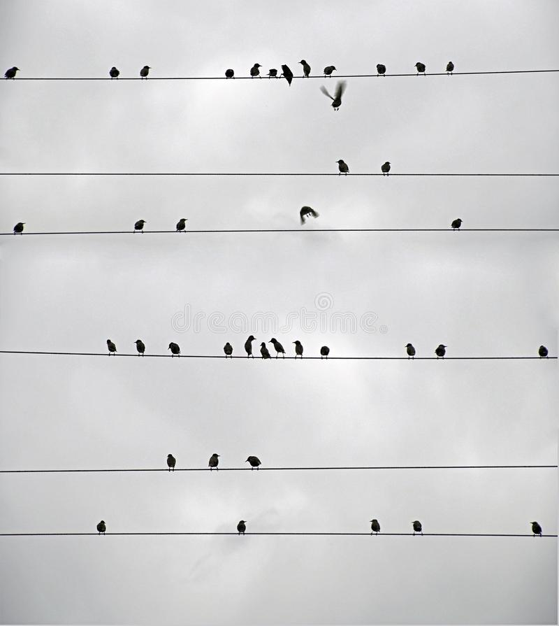 Autumn. A flock of birds on the power line. Starlings. Autumn. A flock of birSilhouettes. Black White Sky Lineds on the power line. Starlings royalty free stock image