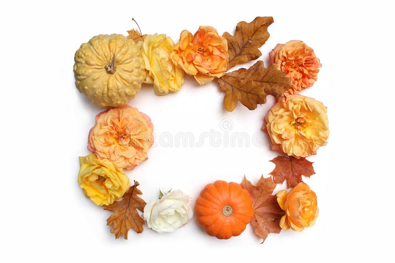 Autumn floral frame made of colorful maple, oak leaves, pumpkins and fading roses isolated on white background. Fall and royalty free stock images