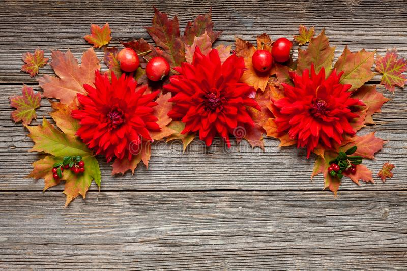 Autumn Floral pattern with colorful autumn leaves, red dahlias and apples on vintage wooden background. stock photography