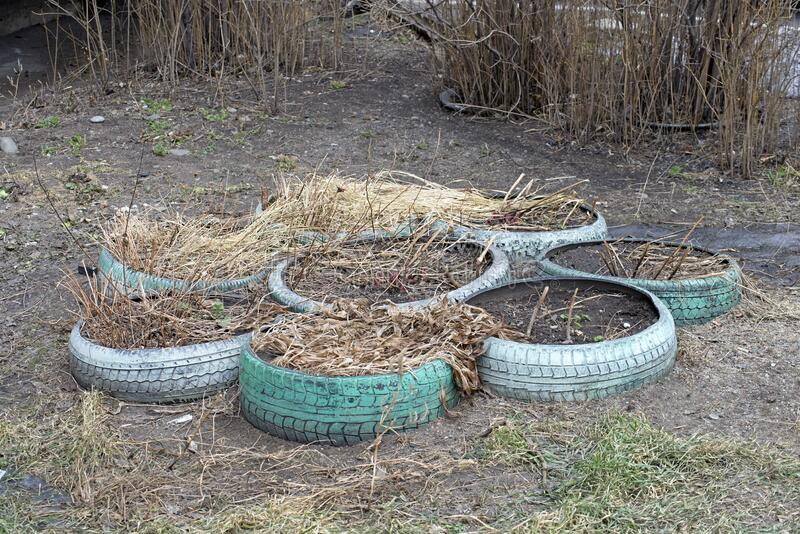 Autumn flower bed of old car tires royalty free stock photography