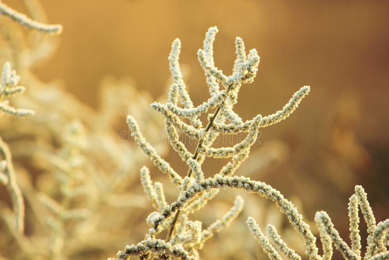 Autumn Flowering-gras royalty-vrije stock fotografie