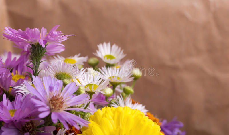 Download Autumn flowers stock image. Image of chrysanthemum, flowers - 21562887