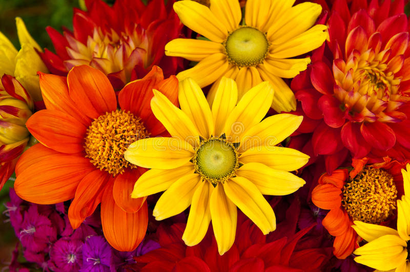 Download Autumn Flowers stock photo. Image of bloom, blossom, orange - 22122594