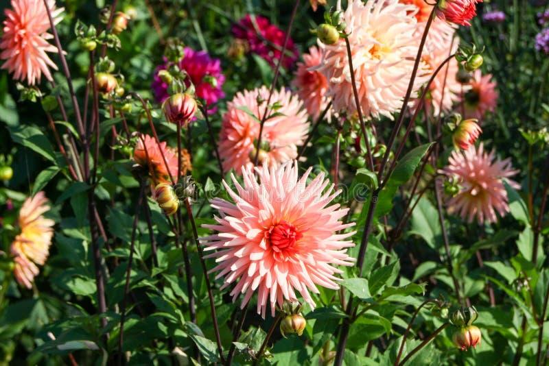 Autumn Flowers photographie stock libre de droits