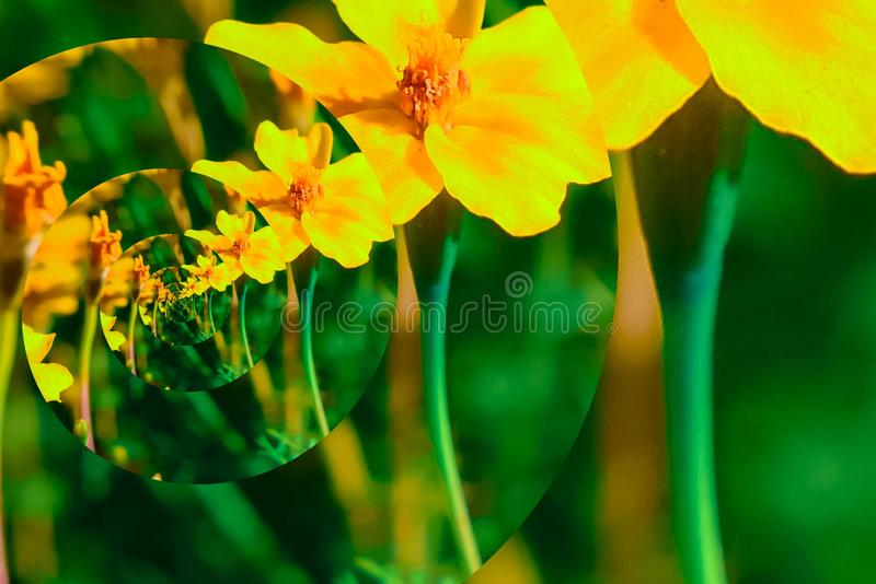 Autumn flowers on a clear Sunny day in a Park stock illustration