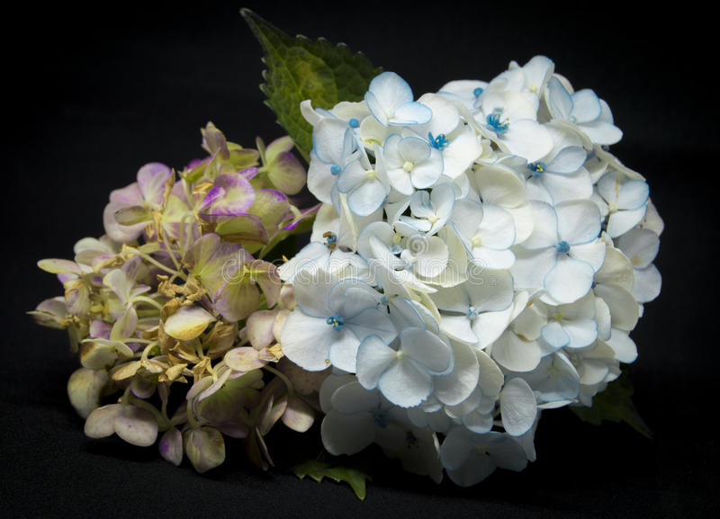 Autumn Flowers, España, 2016 imagen de archivo libre de regalías