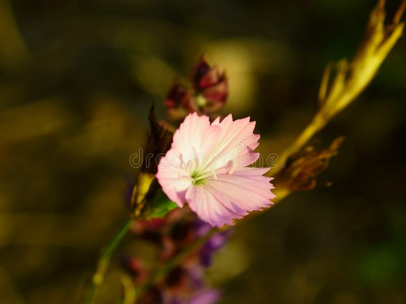 Autumn flowers in the forest royalty free stock photos