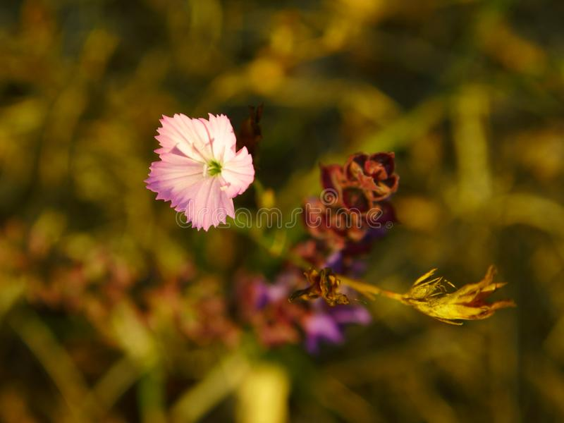 Autumn flowers in october forest stock photography