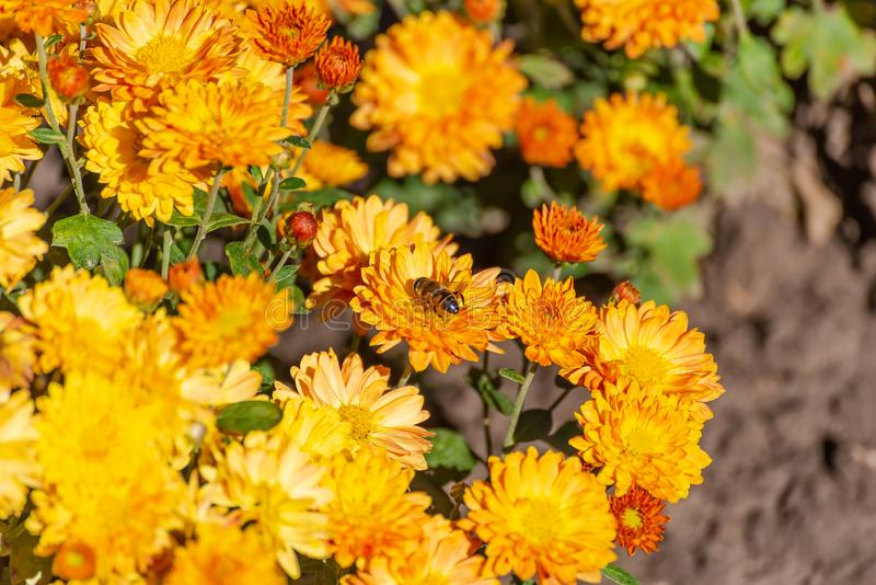 Autumn Flowers In The Park Stock Image Image Of Bloom 160183405