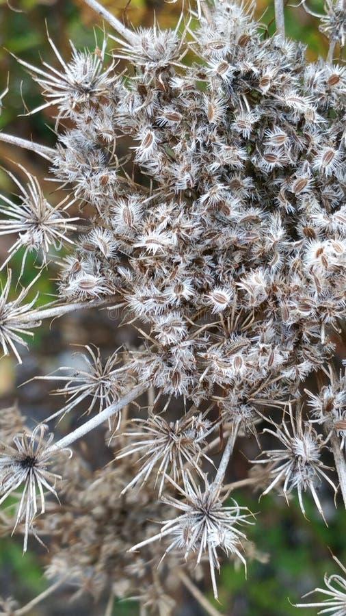 Autumn Flowers sec photo stock