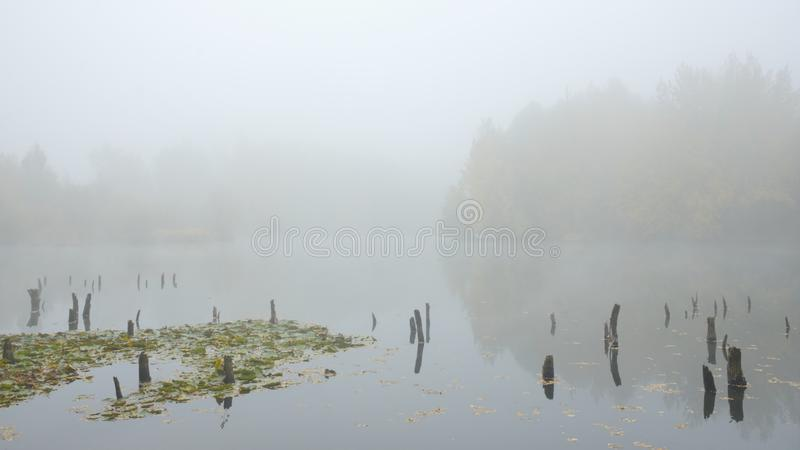 Autumn fog on the lake royalty free stock photography