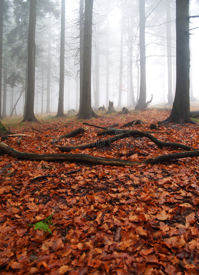Download Autumn foggy forest stock image. Image of view, trees - 6719749