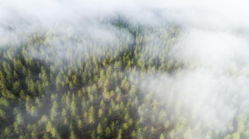 Autumn Foggy Forest With Colorful Trees In Mist Clouds Aerial View. Nature Landscape Of Woodland In Fog royalty free stock image