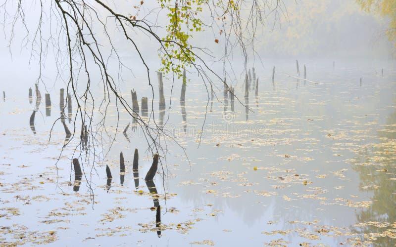 Morning autumn atmosphere royalty free stock photos