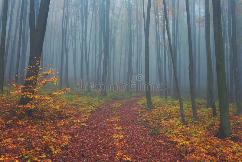 Autumn foggy mystical forest, fall colors nature background royalty free stock image
